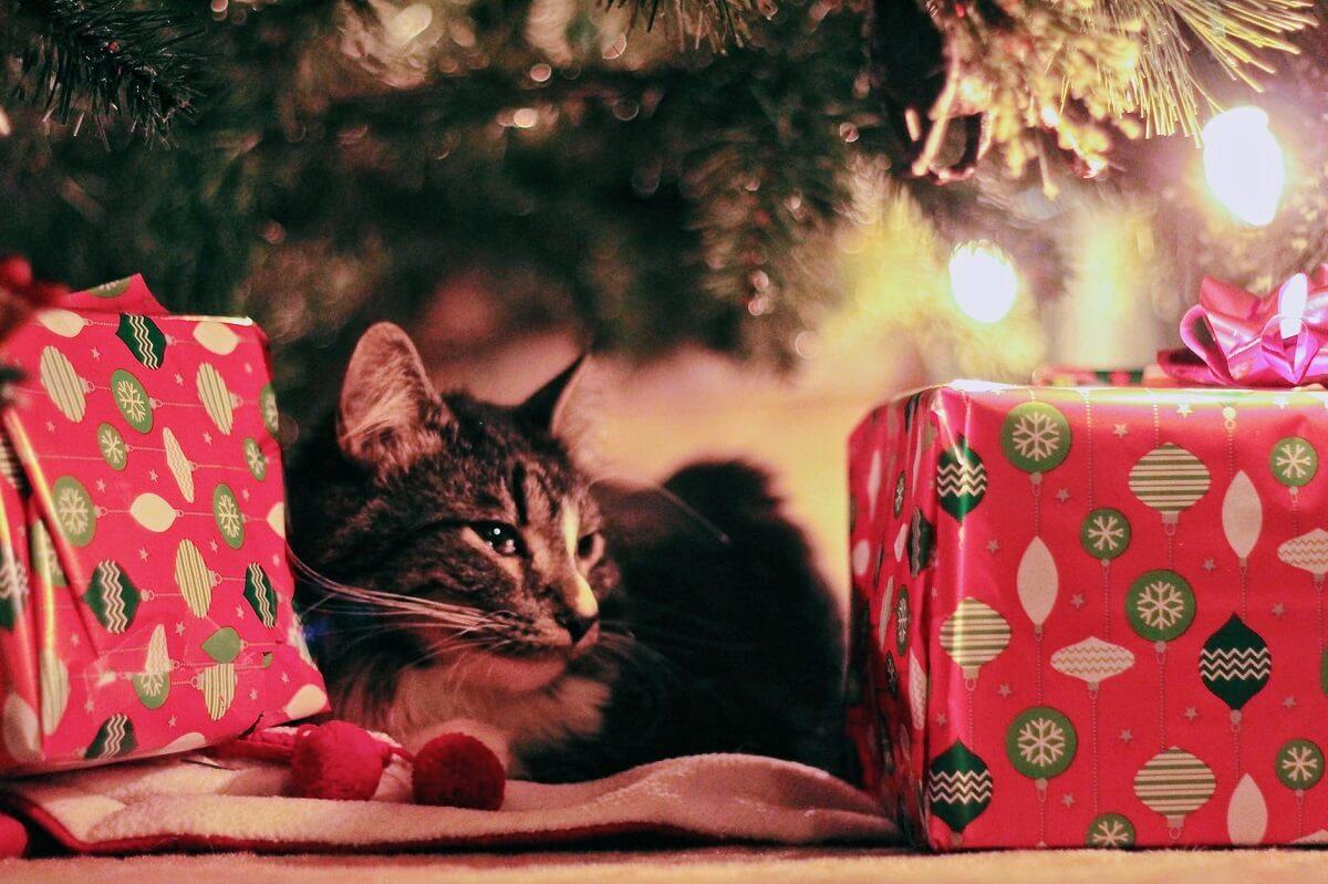 小3男子のクリスマスプレゼント