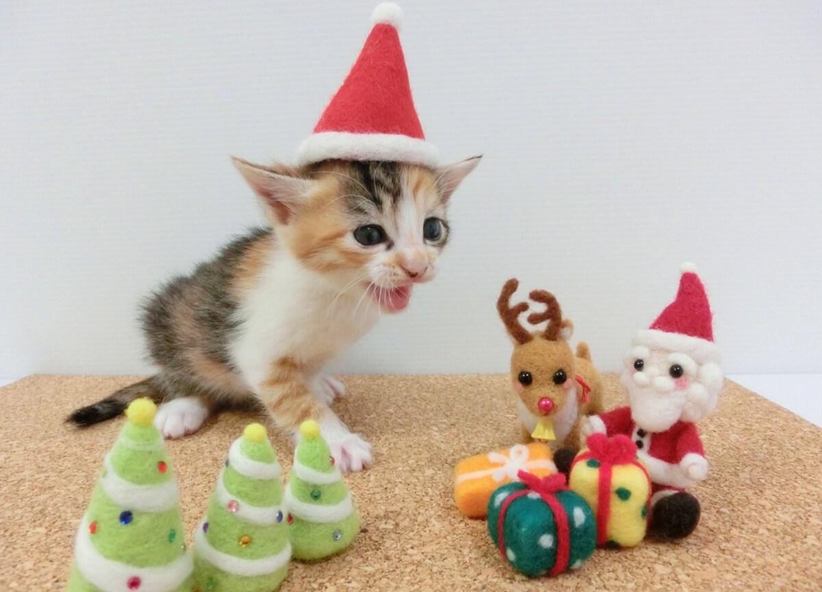2020年のクリスマスプレゼント 知育玩具編