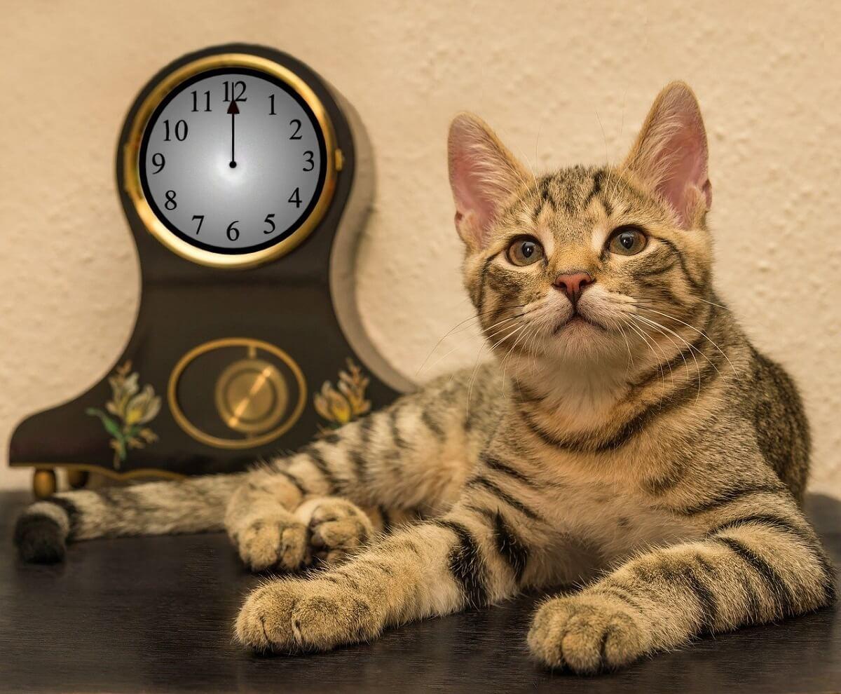 合格時計は受験のために開発された唯一の腕時計